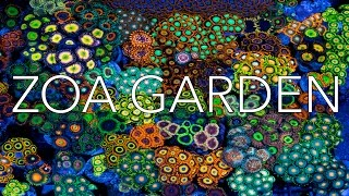 Download Zoa Garden by JoshPorkSandwhichZoas -Florida Frag Swap Video