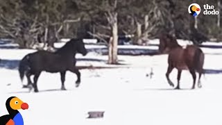 Download Wild Horses Reunite After Six Months Apart | The Dodo Video
