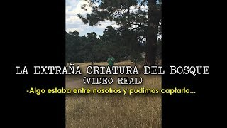 Download LA EXTRAÑA CRIATURA DEL BOSQUE (VIDEO REAL) Video
