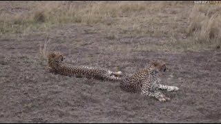 Download Pt 1 Safari Live's Sunset Safari Drive at 3:30 PM on Aug 22, 2017 Video