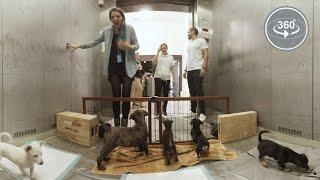 Download Puppy Elevator Surprise (360° Video) Video