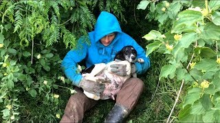 Download Top 5 Rescue Videos - over 15 million views Video