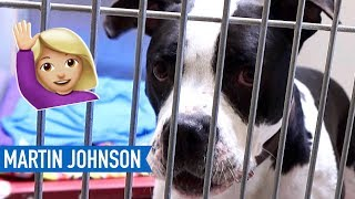 Download 🐶CHOOSING A DOG 🐶| Panhandle Animal Shelter Video