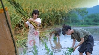 Download 月儿圆圆,稻米飘香,正逢农家收谷忙Full Moon, Fragrance of Ripe Rice, Farmers Busy Harvesting Crops | Liziqi Channel Video