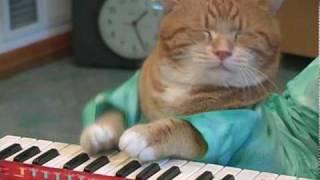 Download Keyboard Cat REINCARNATED! Video