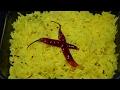 Download Lemon Rice Recipe | Easy Lemon Rice Recipe | Nimmakaya Pulihora Recipe in Hindi | Quick Lemon Rice Video
