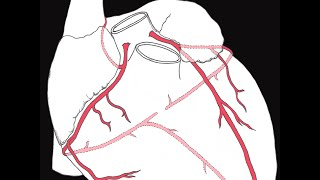 Download Coronary circulation of the heart Video