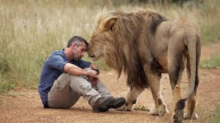 Download When This Man Found Two Lions He'd Rescued As Cubs, One Of Them Pounced In A Terrifying Instant Video
