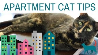 Download 5 APARTMENT CAT TIPS! (tips for enriching your cat's environment) Video