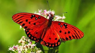Download Butterfly - My animal friends - Animals Documentary -Kids educational Videos Video