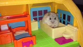 Download Happy Hamsters & their Apartment Life! Video