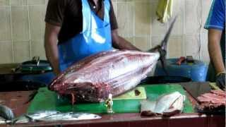 Download Tuna cleaned at Male, Maldives fish market Video
