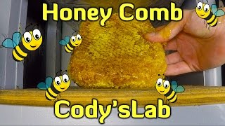 Download HYDRAULIC PRESS vs HONEYCOMB - Cody'sLab Video