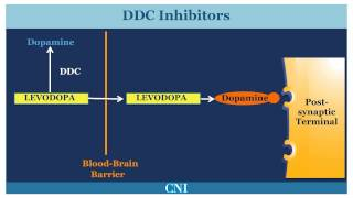 Download Medications for the Treatment of Parkinson's Disease Video