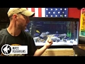 Download How to set up an African Cichlid tank. 4 easy steps: Mbuna Video