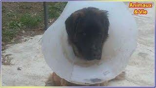 Download 6 mois de prison avec sursis pour l'homme ayant traîné le chien Rocky derrière sa voiture Video