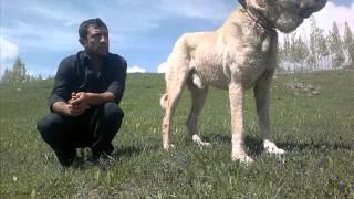 Download Doğu Anadolu Şampiyonu Keş Video