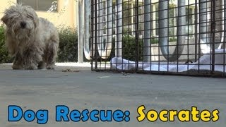 Download Dog Rescue: Socrates. Hope For Paws & Bill Foundation. Music by Derek Luttrell (Please share) Video