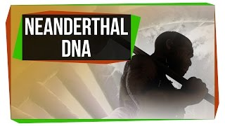 Download What Neanderthal DNA Is Doing To Your Genome Video
