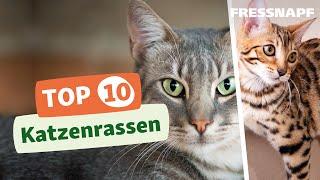 Download Top 10 Katzenrassen Video