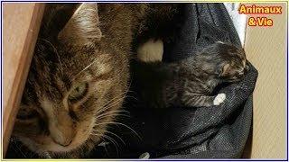 Download Une chatte errante ramène une petite surprise à la femme qui lui donne à manger Video