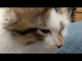 Download Kitten Close Up 2017-05-19 Take Two Video
