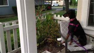 Download Excited Dog Goes Wild When Owner Returns Home Video