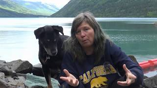 Download Why #FREECAPONE is #HAPPYCAPONE: RVing with a Dog FAQ: Why Capone Hates Leashes Video