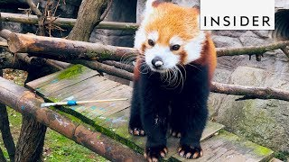 Download Zoo Teaches Animals to Paint Video