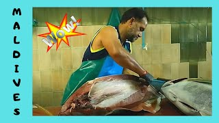 Download THE MALDIVES, CLEANING a 50Kg TUNA at the FISH MARKET in Malé Video