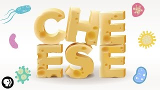 Download The Delicious Science of CHEESE! Video