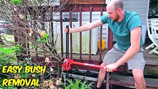 Download Easiest Way to Remove Bush Stumps! Video