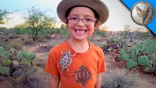 Download Horned Lizards in Our Backyard! Video