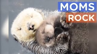 Download Best Animal Moms Ever | Motherly Animals Compilation | The Dodo Best Of Video