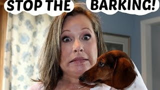 Download STOP THE BARKING!-Testing Bark Deterrents Video