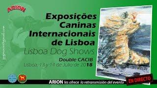 Download 132ª EXPOSIÇÃO CANINA INTERNACIONAL DE LISBOA (SABADO) Video