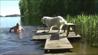 Download FUNNY And CUTE Animals Being Jerks Compilation! (Watch And LAUGH 2017) Video