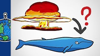 Download What Nuclear Bombs Taught Us About Whales Video