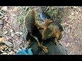 Download Yılın magazin bombası. Sincap Alf ile Bonibon cilveleşiyor Video
