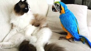 Download Funny Parrots Annoying Cats Compilation || NEW HD Video