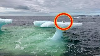 Download Fishermen Think They Found A Seal On A Floating Iceberg Until They Got A Closer Look Video