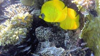 Download Tutti i colori del Mar Rosso - La barriera corallina - Parte seconda Video