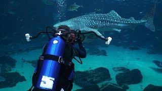 Download Georgia Aquarium (HD) | JONATHAN BIRD'S BLUE WORLD Video