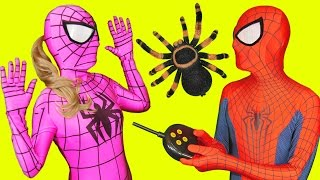 Download Pink Spidergirl Spider Prank with Spiderman in Real Life Fun Video