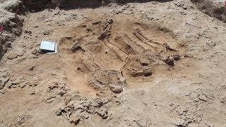 Download Batavia's mysteries unfold with discovery of mass grave Video