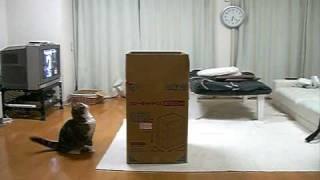 Download 大きな箱とねこ。 Video