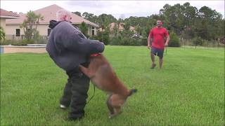 Download Excellent Protection Training for you Dog Video
