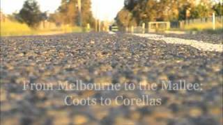 Download Birds of Eastern Australia Video