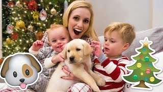 Download NEW PUPPY HOLIDAY SURPRISE! 🐶 Video
