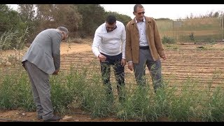 Download Improving forage production on salt-affected farms in Laayoune, Morocco Video